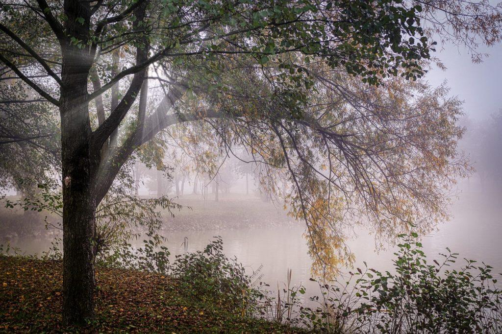 Brume au dessus de l'étang